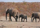 Elephants passing our camp