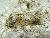 Cambodia Conservation Project Finds New Species of Nudibranch.