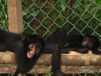 Peru Animal Rescue Centre Receives Government Praise