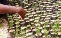 Thailand Conservation Reforestation Project Moves to Higher Grounds!