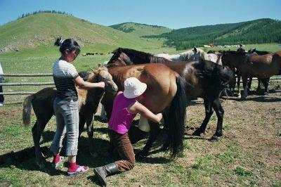 Volunteer and horses in Mongolia