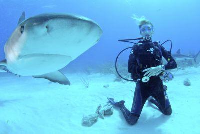 Shark Conservation in Fiji