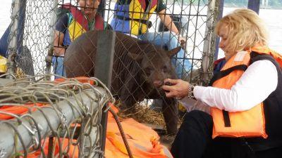 Projects Abroad Peru Conservation staff and volunteers transfer Cholita the spectacled bear, who was rescued from the circus, to Taricaya Ecological Reserve in partnership with Animal Defenders International