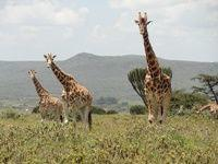 Projects Abroad in Kenya begins new partnership with Soysambu Conservancy