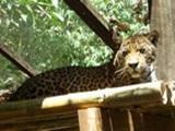 Latest News from the Peruvian Jungle