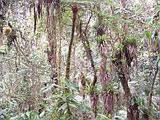 Jungle near site