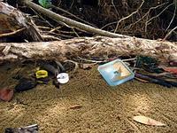 Plastic litter on the beach