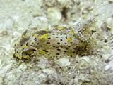 Cambodia Conservation Project Finds New Species of Nudibranch