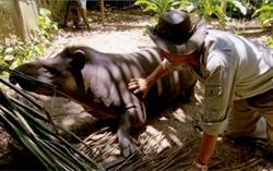 Jack pats a tapir