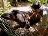 Projects Abroad Featured on Jack Hanna's Into the Wild