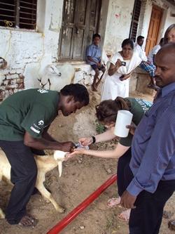 Veterinary outreach
