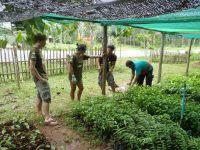 Help with Important Reforestation Work in Thailand