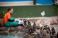 Celebrating World Penguin Day with SANCCOB
