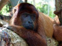 Latest news from the Peruvian rainforest