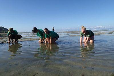 Volunteers plant mangrove seedlings
