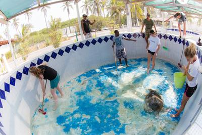 Volunteers on the Conservation Project in Mexico clean a sea turtle and its tank