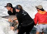 Nouveau projet protection des requins, obtention d'un label vert au Costa Rica, projets de Noël de deux semaines...