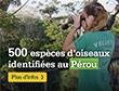 Le décompte d'oiseaux sur notre projet d'écovolontariat dans la forêt amazonienne a franchi un cap important