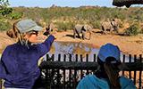 Le drame des éléphants au Botswana