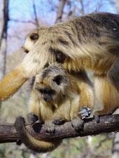 Il progetto di riabilitazione delle scimmie in Argentina - Newsletter n.12