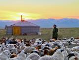 Från nomader i Mongoliet, till dykning i Kambodja