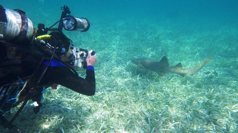 Freiwilliger fotografiert einen Hai