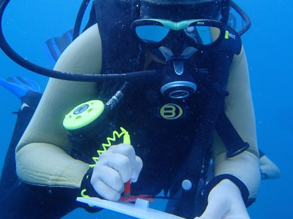 Ein Freiwilliger dokumentiert verschiedene Haiarten unter Wasser