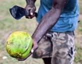 Öffnen einer frischen Kokosnuss für die Freiwilligen