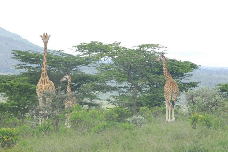 Wunderbare Tierwelt