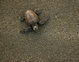 Eine Schildkröte am Strand in Mexiko