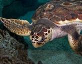 Eine Schildkröte unter Wasser