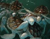 Schildkröten im Naturschutz - Projekt