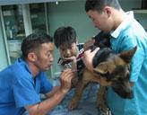 Praktikum in der Tiermedizin