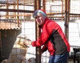 Freiwillige im Hunde - Asyl