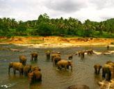 Elephanten - Waisenhaus in Sri Lanka