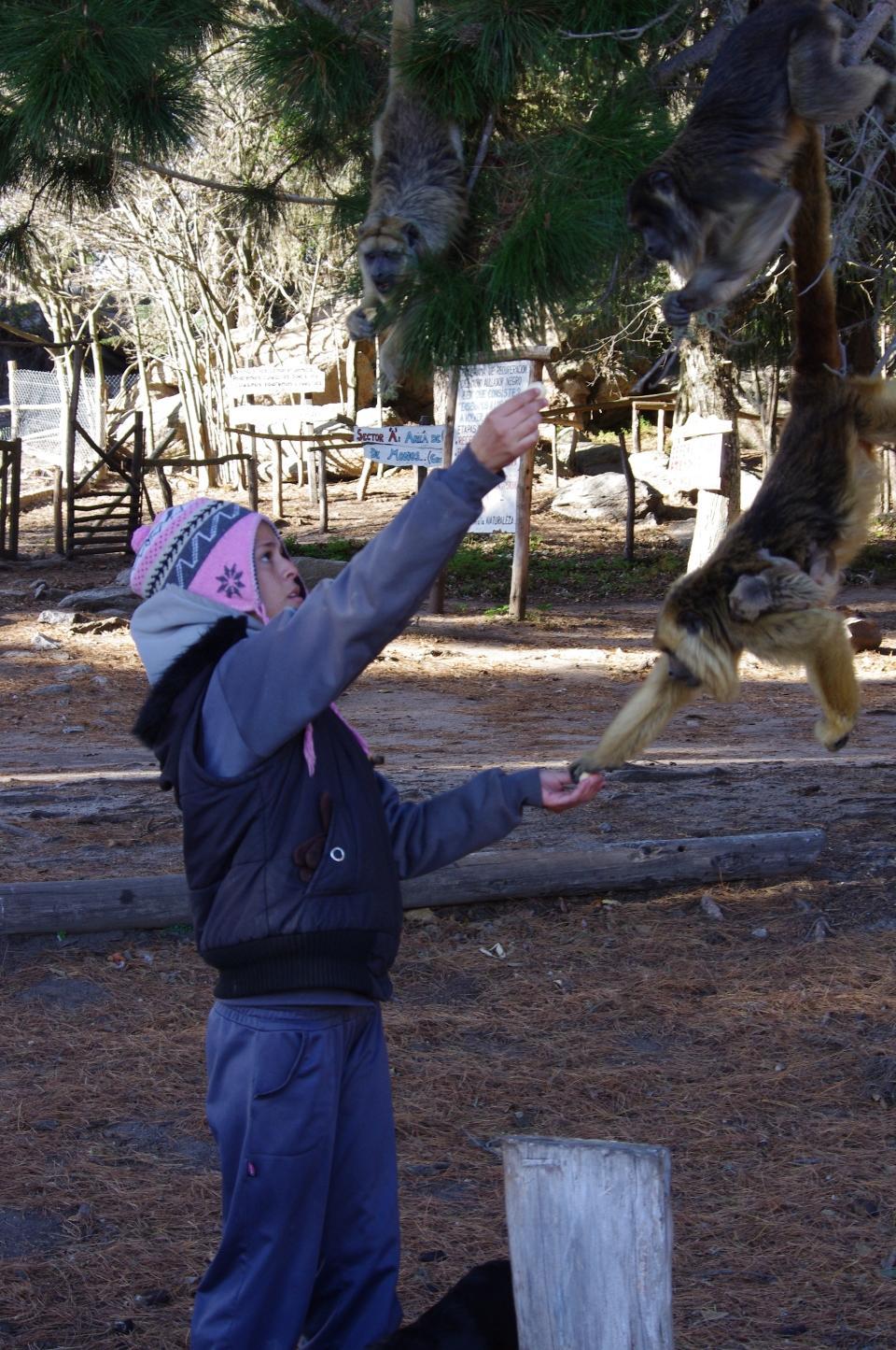 Frivilligt arbejde på rehabiliteringscenter for aber i Argentina