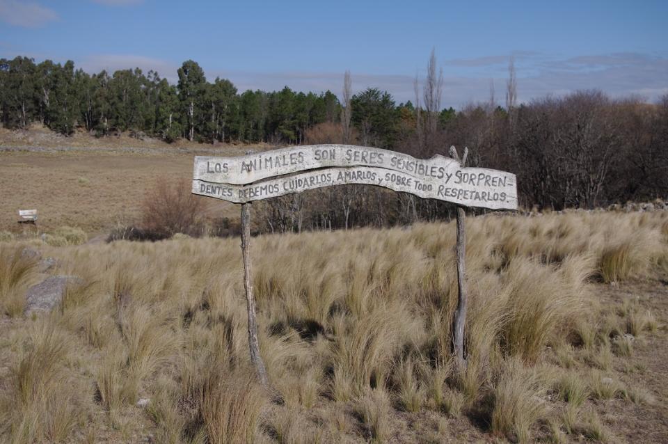 Natur & Miljø projekt: Rehabilitering af aber i Argentina