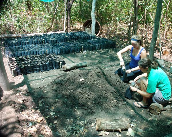Frivillige arbejder på Natur & Miljø projekt