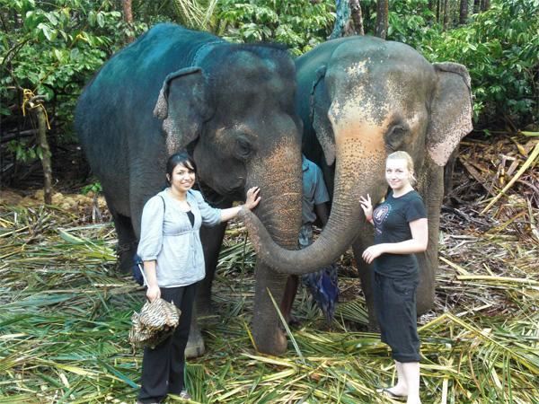 Volontører med elefanter i Indien