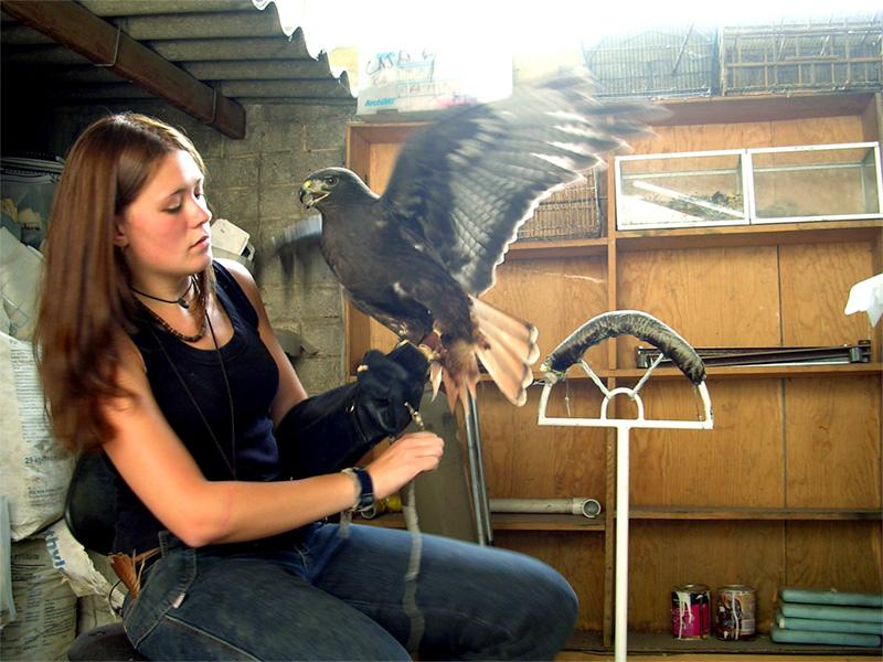 Frivillig arbejder på dyrepasningsprojekt i Mexico