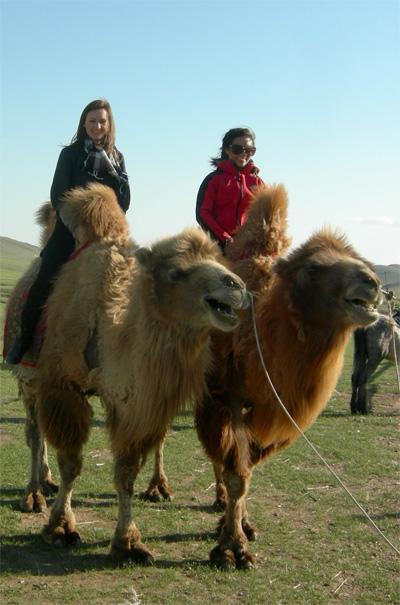 Frivillige rider på kameler i Mongoliet