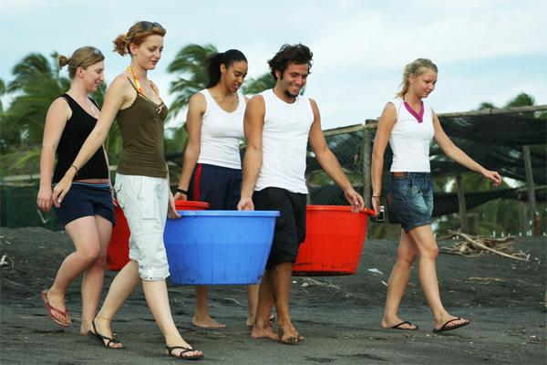 Volunteers taking baby turtles to the sea