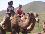 Weekend camel riding