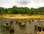 Elephant orphanage