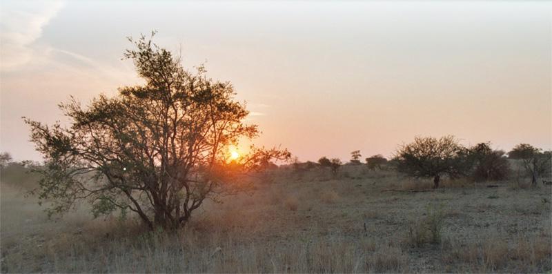 Paysage de la savane africaine en Afrique du Sud