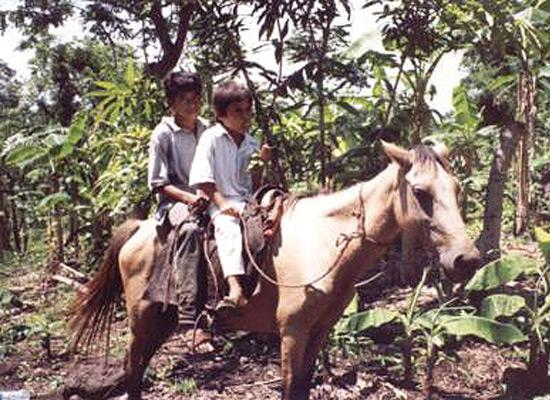 Children on horse