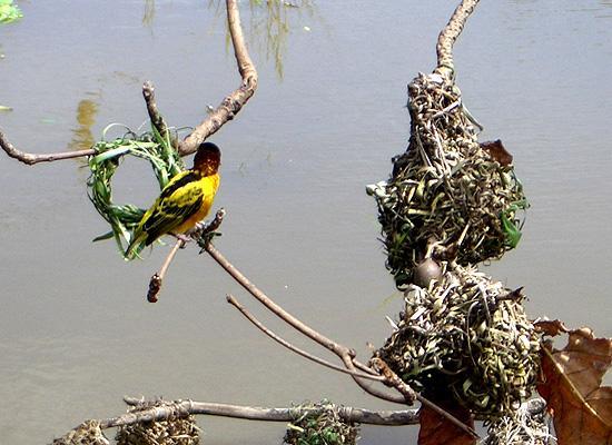 Ghana wild life