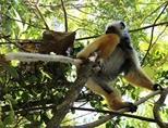 Madagascar est connu pour son écosystème unique au monde