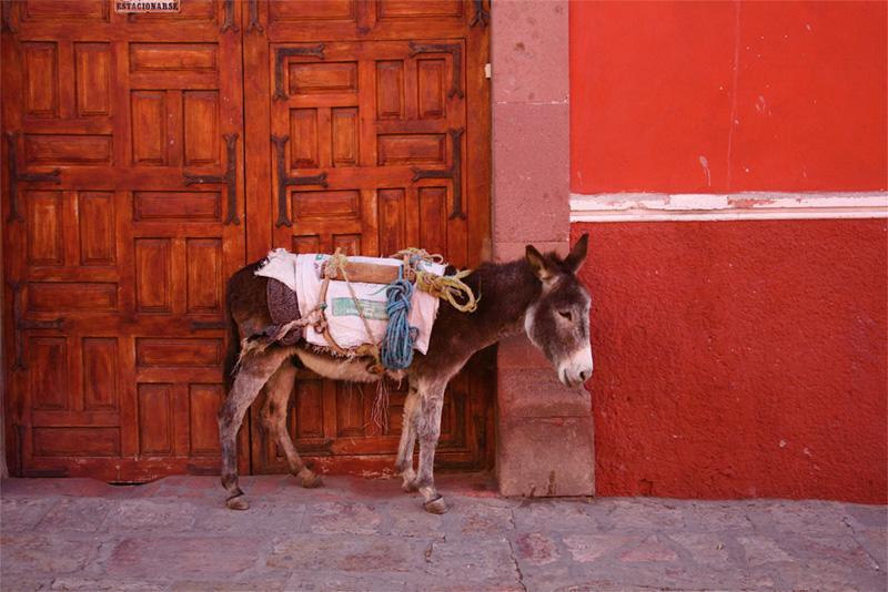 Âne près d'un mur à Guadalajara