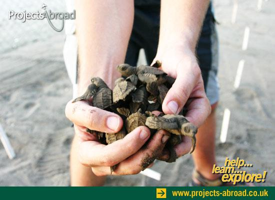 Hatchlings to release